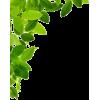 Leaf Border - Uncategorized -