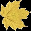 Leaf - Objectos -
