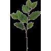 Leaf - Rośliny -