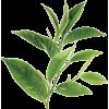 Leaf - 植物 -