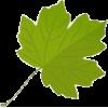 Leaf - Uncategorized -
