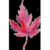 Leaves - Rośliny -