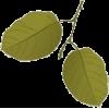 Leaves - Uncategorized -