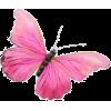 LIAH - BORBOLETA - Animales -