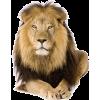 Lion - Animals -