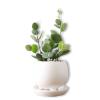 Little Plant - Plants -