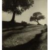 MAX DUPAIN landscape photo 1938 - Uncategorized -