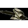 Magpie - Animals -