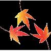Maple - Uncategorized -