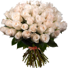 Pink Roses - Растения -