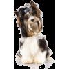 Maxie - Živali -