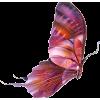 Butterfly - Zwierzęta -