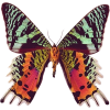 Butterfly - Animals -
