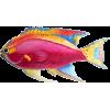 Fish - Tiere -