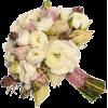 Flower - Plantas -
