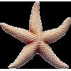 Star - Animals -