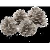 Acorn - 植物 -