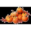 Pumpkin - Rośliny -