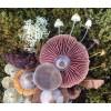 Mushroom - My photos -