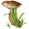Mushrooms - Natureza -