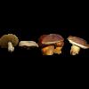 Mushrooms - Narava -
