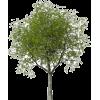 NATURE - Plants -