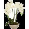 NATURE - Biljke -