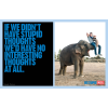 If we didn't have stupid - My photos -