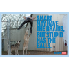 Smart may have the brain - My photos -