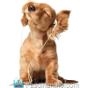 Dogy - Tiere -