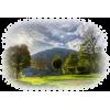 Nature trees - Illustrations -