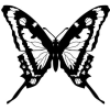 Butterfly - イラスト -