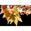 Leaves - 植物 -