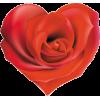 Rose - Иллюстрации -