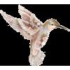 Bird - Ilustrationen -