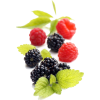 Fruits - Obst -