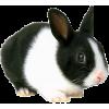 Rabbit - Zwierzęta -