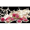 ružice - 植物 -