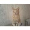 Niwi's cat - Uncategorized -