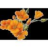 ORANGE FLOWER - Plants -