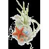 Ocean Effects - Items -
