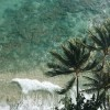 Ocean and palmtrees - Nature -