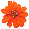Orange Flower - Plants -