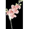 Orchid Stem Pink - Plants -