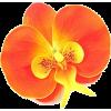 Orchid - Uncategorized -