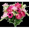 PEONIES PINK - Plantas -