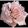 PINK FLOWER ROSE - Plantas -