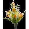 PLANTS - Priroda -