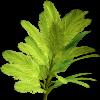 Palm  - Rośliny -