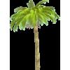 Palm tree - 植物 -